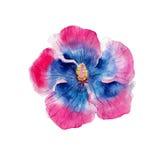 De geïsoleerde bloem van de waterverfhibiscus, hand, op wit wordt getrokken dat royalty-vrije illustratie