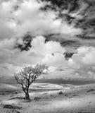 De geïsoleerde Boom in onvruchtbaar landschap, Bodmin legt, Cornwall, het UK vast royalty-vrije stock afbeelding