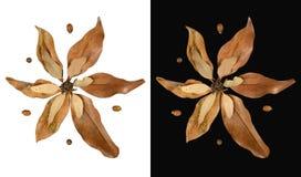 De geïsoleerde decoratie van dalingsbladeren in bloemvorm Royalty-vrije Stock Afbeelding