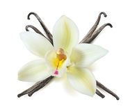 De geïsoleerde gekruist peulen van de vanillebloem Royalty-vrije Stock Afbeeldingen