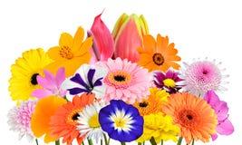 De Geïsoleerde Inzameling van het bloemboeket van Diverse Kleurrijke Bloemen Royalty-vrije Stock Foto's