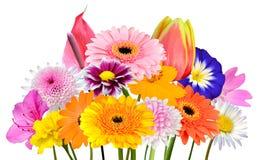 De Geïsoleerde Inzameling van het bloemboeket van Diverse Kleurrijke Bloemen Stock Foto