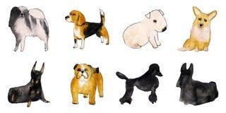 De geïsoleerde reeks van de waterverfillustratie honden Royalty-vrije Stock Foto's