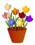De geïsoleerdec Bloemen van Tulpen in Pot Royalty-vrije Stock Afbeelding