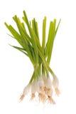 De geïsoleerdee uien van de lente, Stock Foto's