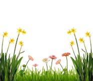 De geïsoleerdep tuin van de lente, Stock Foto's