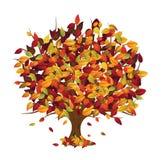 (De geïsoleerdes) boom van de herfst Stock Foto's