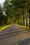 De geasfalteerde landelijke weg zonder weg die, lange bomen groeit op de kant van de weg merken Stock Foto