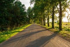 De geasfalteerde landelijke weg zonder weg die, lange bomen groeit op de kant van de weg merken Stock Afbeeldingen