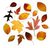 De geassorteerde bladeren van de Herfst Stock Afbeeldingen