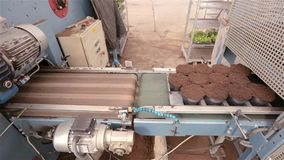 De geautomatiseerde lijn van de installatievoorbereiding, moderne installatie het groeien installaties die, bloemen transportband stock footage
