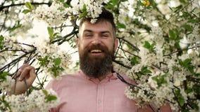 De gebaarde boom van de mensen dichtbij bloeiende kers De kersenbloesem van Hipstersnuifjes Mens met baard en snor op het glimlac stock video
