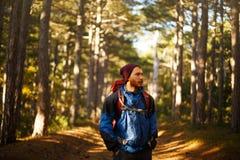 De gebaarde gangen van de wandelaarmens in de pijnboom gele herfst bosbackpacker hipster geniet dalings van landschap Royalty-vrije Stock Afbeeldingen