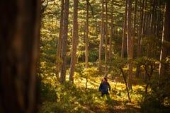 De gebaarde gangen van de wandelaarmens in de pijnboom gele herfst bosbackpacker hipster geniet dalings van landschap Stock Afbeelding