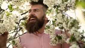 De gebaarde mannelijke boom van de gezichts dichtbij bloeiende kers Hipster met kersenbloesem in baard Mens met baard en snor  stock videobeelden