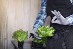 De gebaarde mens in een schort en handschoenen houdt een kom van vers groen s royalty-vrije stock afbeeldingen