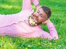 De gebaarde mens met madeliefjebloemen in baard legt op weide, helling op hand, grasachtergrond Mens met baard op gelukkig gezich royalty-vrije stock afbeelding