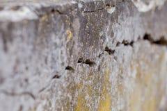 De gebarsten Witte Achtergrond van de Muurtextuur, zeer oude muur met een barst op het stock foto