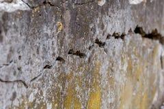 De gebarsten Witte Achtergrond van de Muurtextuur, zeer oude muur met een barst op het stock fotografie