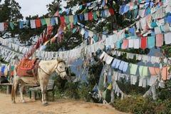 De gebedvlaggen werden gehangen in een bos dichtbij Paro (Bhutan) Stock Afbeeldingen