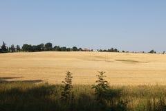 De gebieden en de bossen van de Tsjechische Republiek in Augustus-dag stock foto's