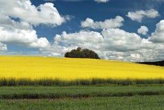 De gebieden en de hemel van de lente Stock Foto's