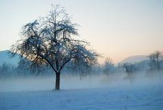 De gebieden en de weiden worden ondergedompeld in de ochtendmist stock fotografie