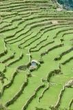 De gebieden Filippijnen van het padieveldterras Royalty-vrije Stock Foto's