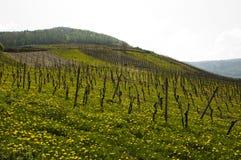 De gebieden Moezel van de wijn Stock Afbeeldingen