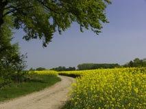 De Gebieden van Canola van de Trog van de weg royalty-vrije stock afbeeldingen