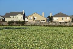 De gebieden van de landbouwer met gewassen Royalty-vrije Stock Fotografie