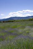 De gebieden van de lavendel met de Kap van MT Stock Afbeeldingen