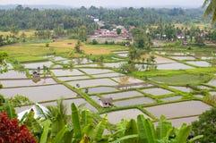 De gebieden van de padie stock afbeelding