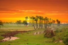 De Gebieden van de padie in India Stock Fotografie