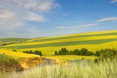 De gebieden van de tarwe royalty-vrije stock afbeelding