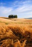 De Gebieden van de tarwe stock afbeelding