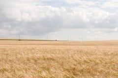 De gebieden van de tarwe royalty-vrije stock afbeeldingen