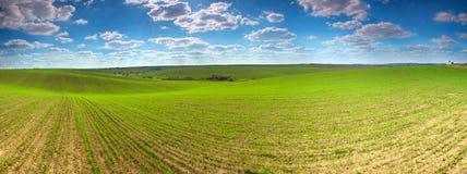 De gebieden van de tarwe Royalty-vrije Stock Fotografie