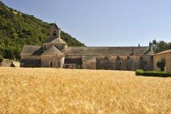 De gebieden van de tarwe bij de Abdij van Senanque, Frankrijk Stock Foto's