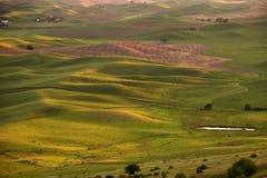 De gebieden van de tarwe bij zonsondergang Stock Fotografie