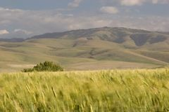 De Gebieden van de tarwe, dichtbij Pendleton 2 Stock Fotografie