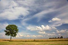 De gebieden van de tarwe/van het graangewas stock foto