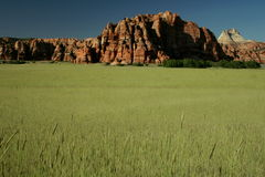 De gebieden van de tarwe voor altijd Stock Foto's