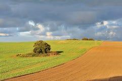 De gebieden van het gewas in platteland Royalty-vrije Stock Afbeeldingen