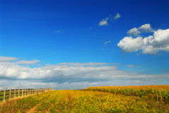 De gebieden van het graan en van de soja Stock Foto's