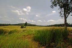 De gebieden van het gras stock foto's