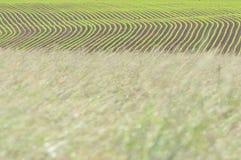 De gebieden van het gras en van de maïs stock foto's