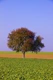 De gebieden van het landbouwbedrijf met eenzame boom Stock Afbeelding