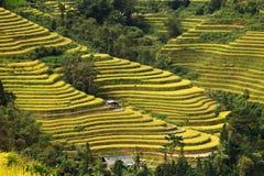 De gebieden van het rijstterras in Ha Giang - Sapa-noordwestenvietnam China, indochina stock foto