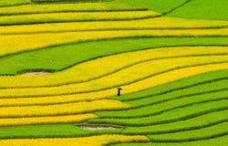 De gebieden van het rijstterras in Sapa, noordwestenvietnam Stock Foto's